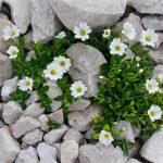Jardines con piedras blancas: consideraciones