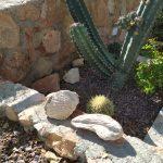 Consejos para crear un jardín zen exterior